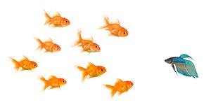 fish_different